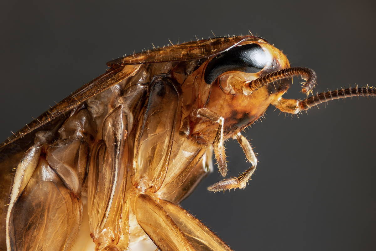 8 weird facts about cockroaches