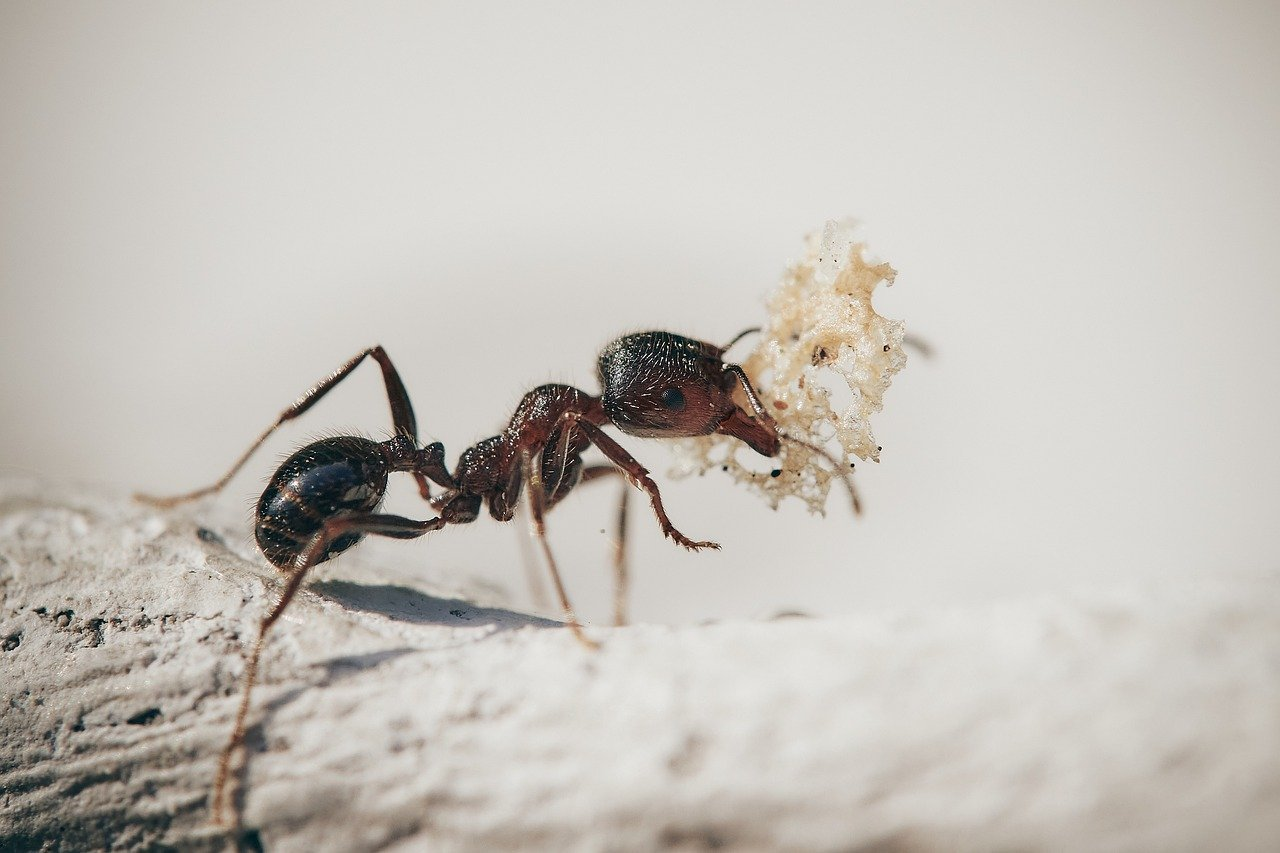 Can You Get Rid Of Ants Without Killing Them