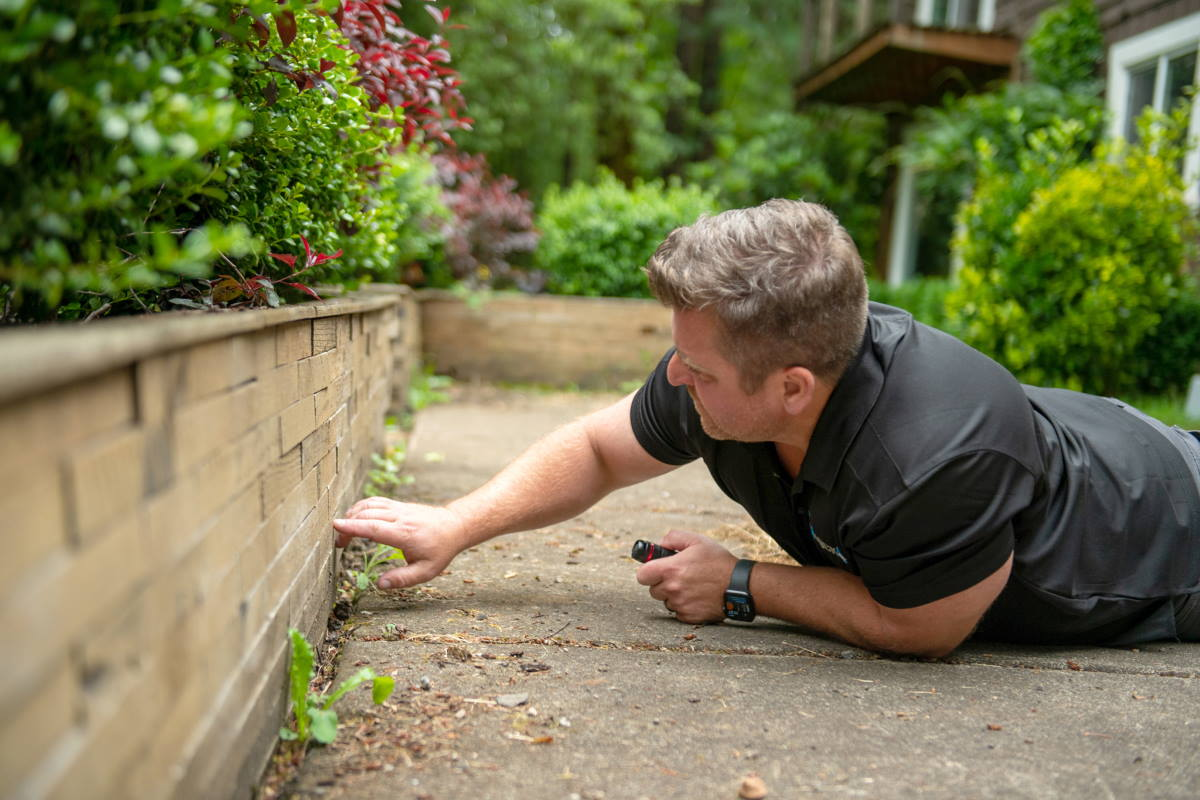 home buying from a pest control expert