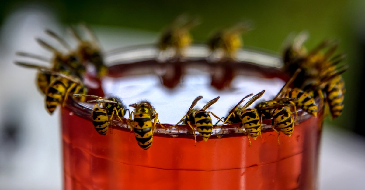 When Should You Worry About That Wasp Near Your Home