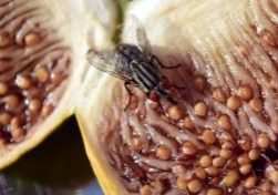 4 Common Foods That Attract Pests In Your Home