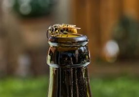 Tips To Keep Wasps Away From Your Event