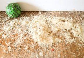 carpenter ant infestation in home